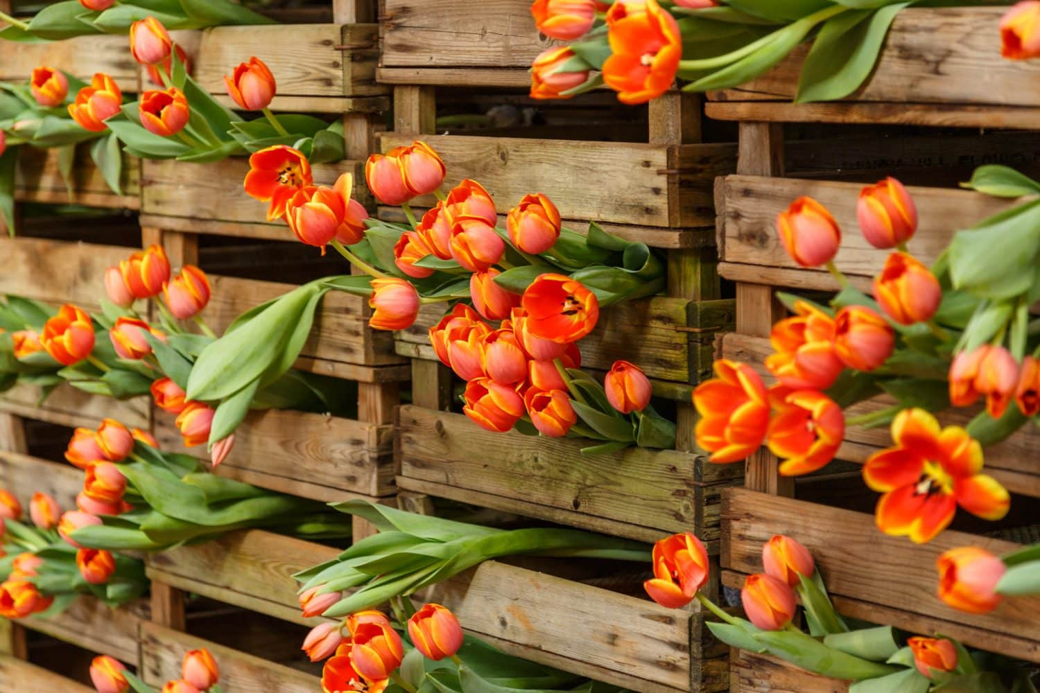 Top tips to Spring into the garden - Melbourne International Flower ...