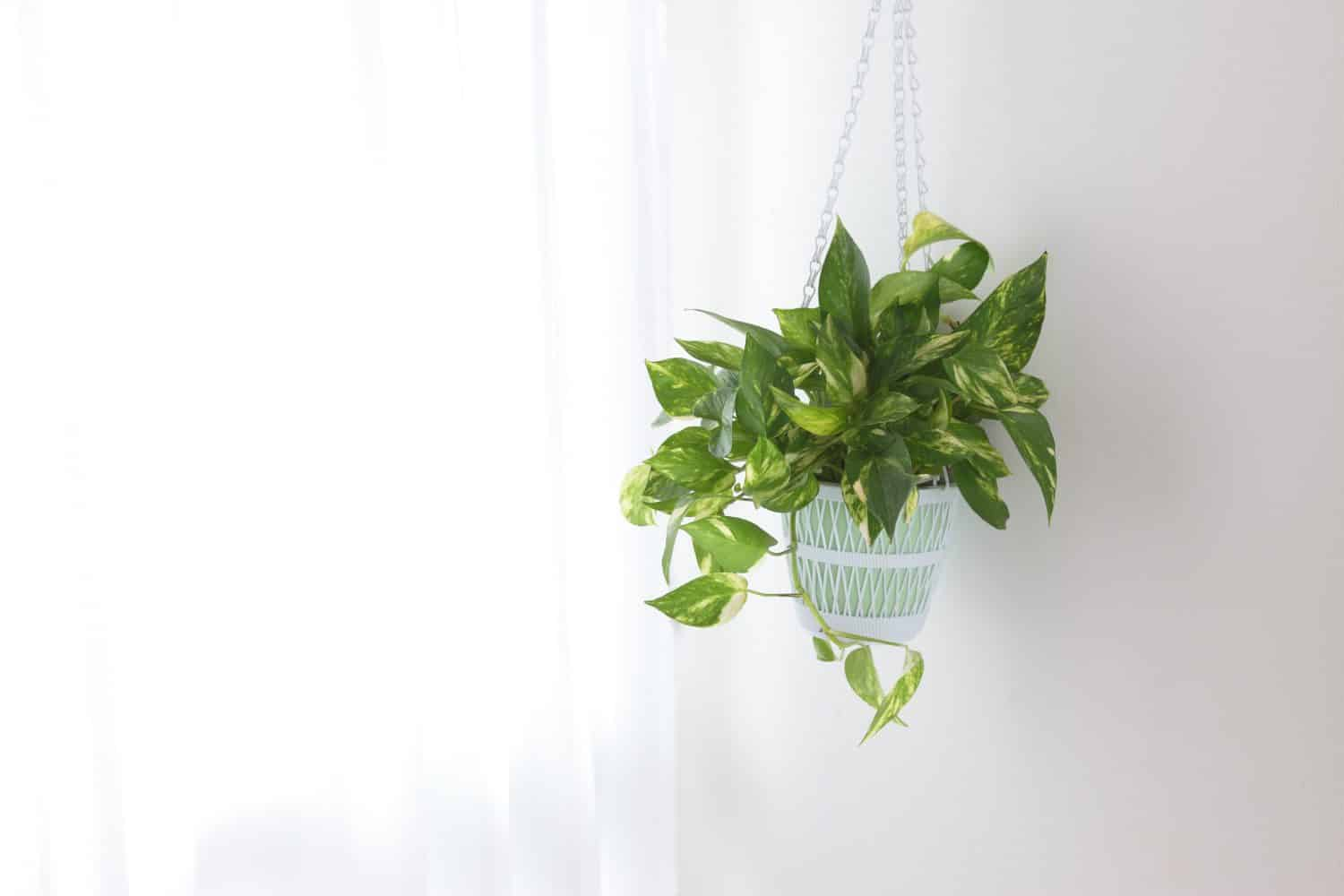 How To Hang Plants