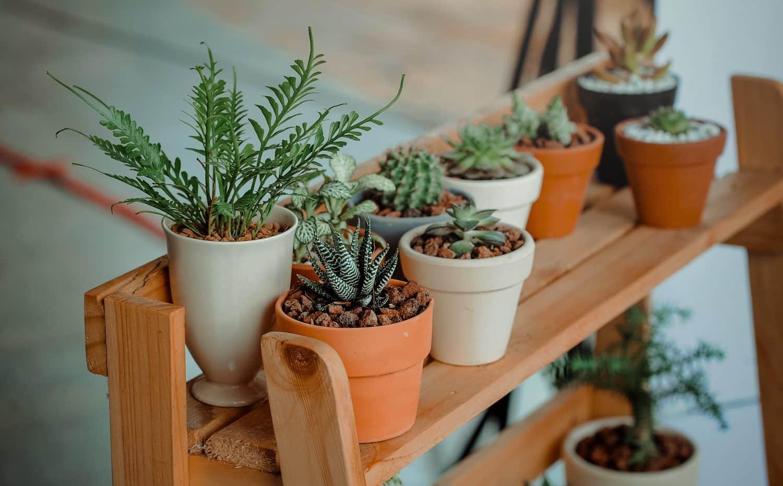 Benefits Of Indoor Gardening Melbourne International