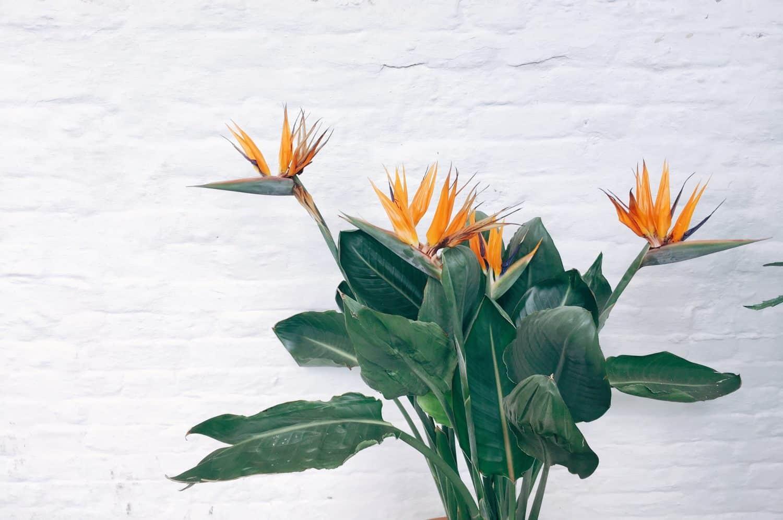Top 10 Low Maintenance Plants Melbourne International Flower Garden Show