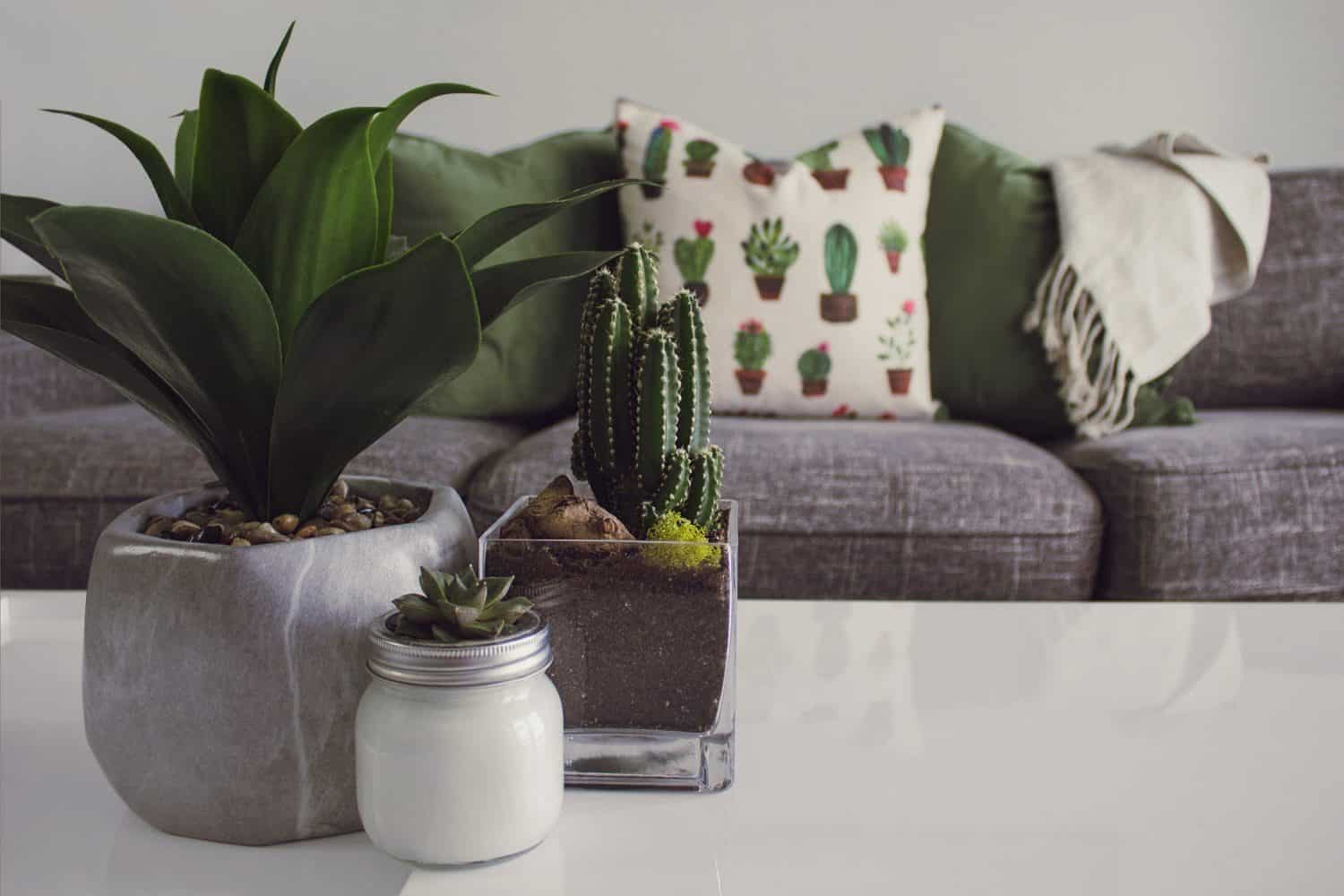 how to care for your indoor plant